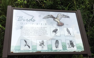 cypressboardbirds