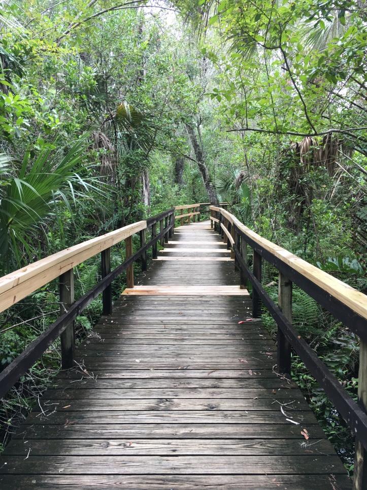 cypressboardwalk
