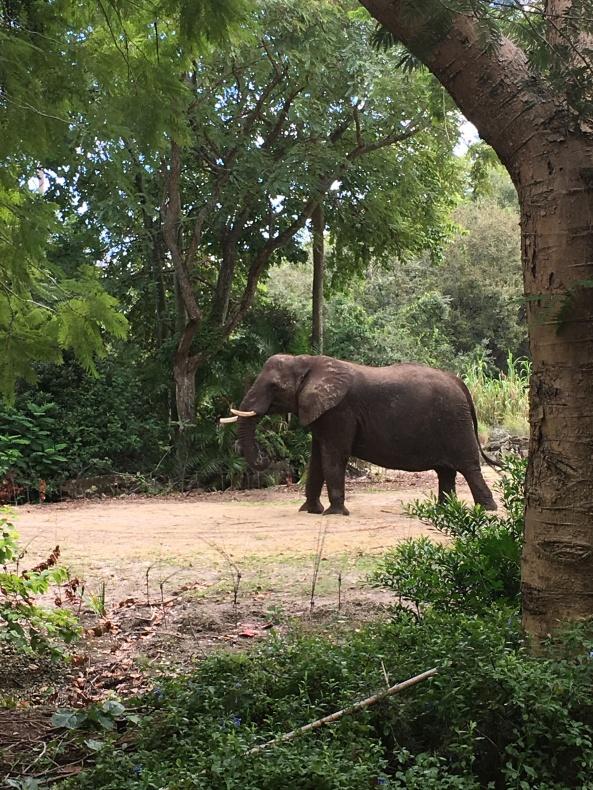 akelephant