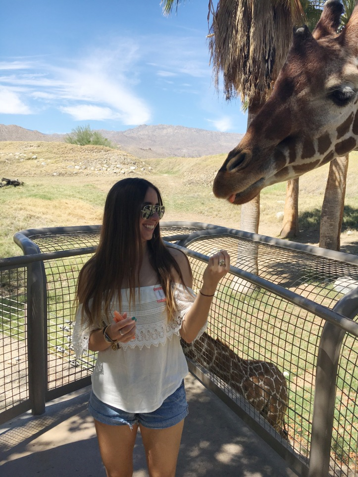 palmspringsgiraffe